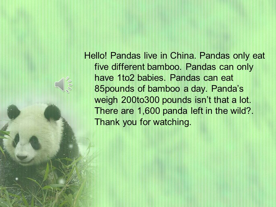 Giant pandas by Felicity