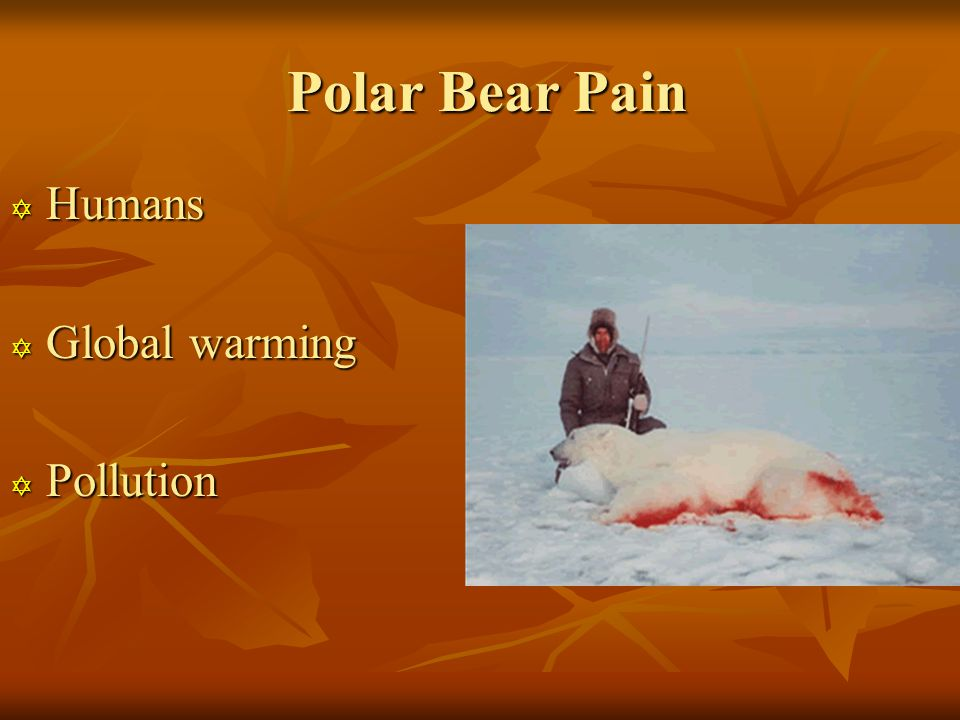 Polar Bear Pain Polar Bear Pain  Humans  Global warming  Pollution
