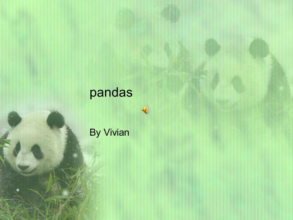 pandas By Vivian