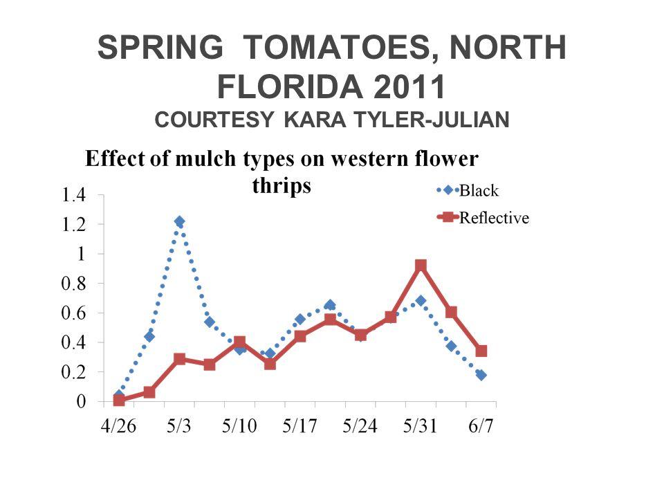 SPRING TOMATOES, NORTH FLORIDA 2011 COURTESY KARA TYLER-JULIAN