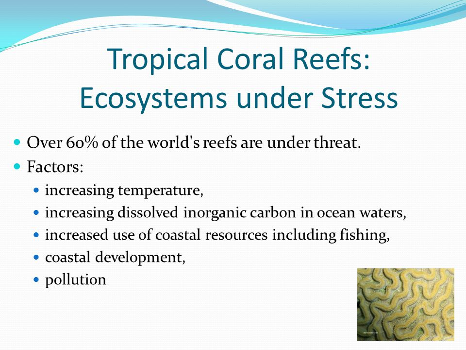 Over 60% of the world s reefs are under threat.