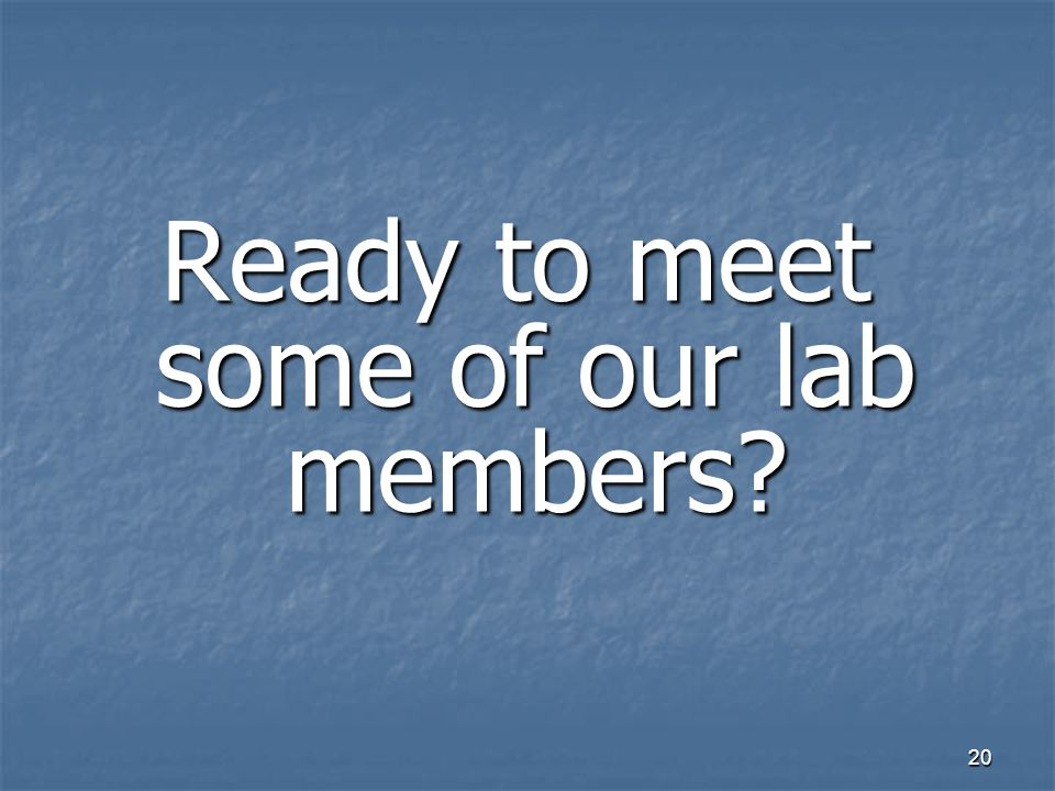 20 Ready to meet some of our lab members?