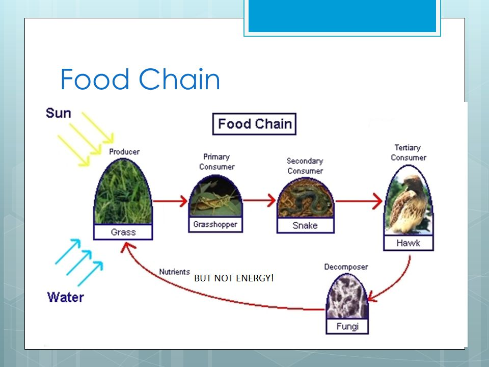 Food Chains  The energy flow from one trophic level to the other is know as a food chain  Producers are at the first TROPHIC LEVEL  Primary Consumers are the SECOND TROPHIC LEVEL  Secondary consumers are at the THIRD TROPHIC LEVEL