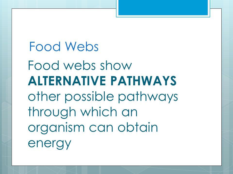 Food Webs Food webs show ALTERNATIVE PATHWAYS other possible pathways through which an organism can obtain energy