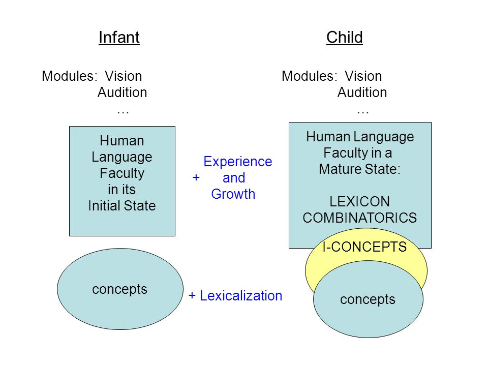 InfantChild Modules: Vision Audition … concepts Experience + and Growth Human Language Faculty in its Initial State Modules: Vision Audition … Human Language Faculty in a Mature State: LEXICON COMBINATORICS concepts I-CONCEPTS + Lexicalization