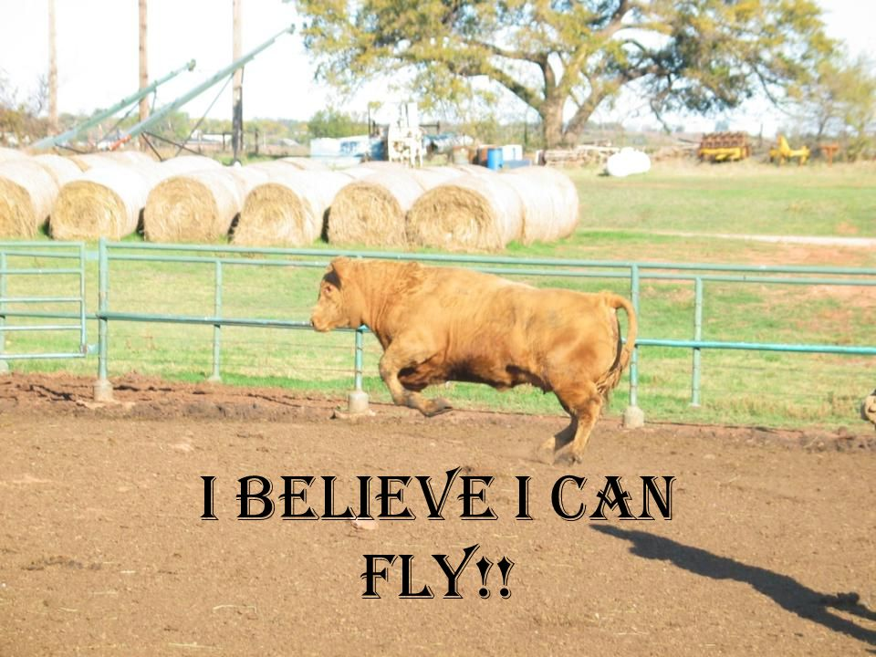 I believe I can fly!!