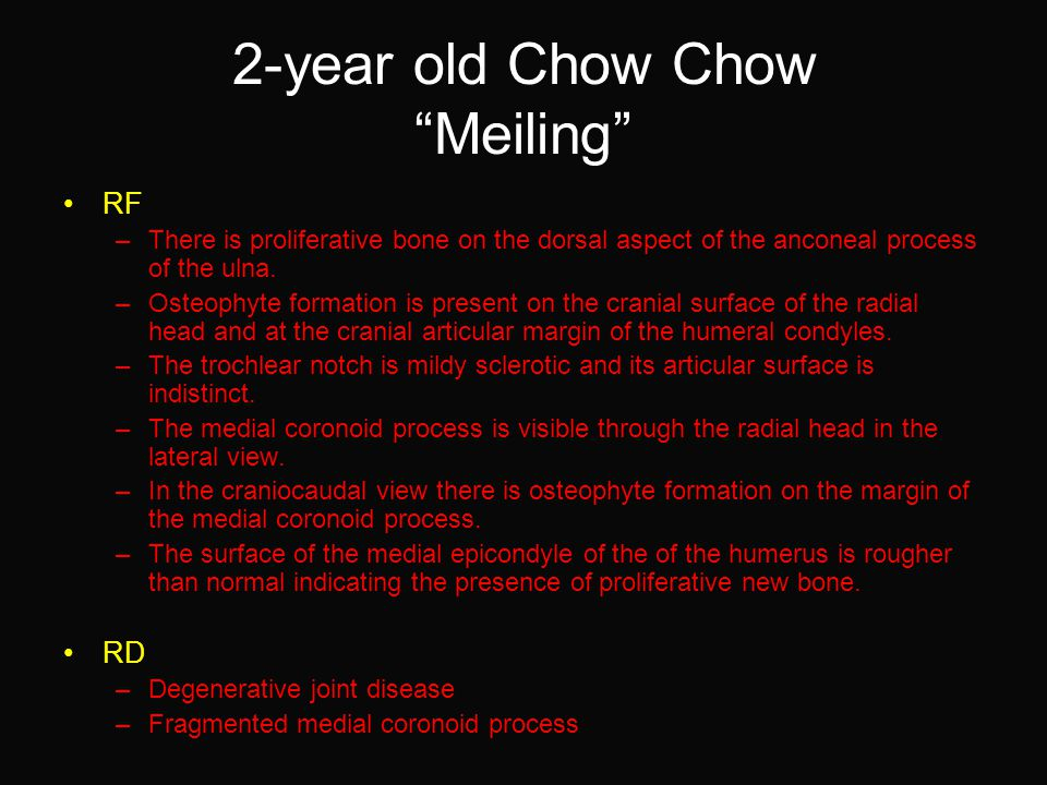 2-year old Chow Chow Meiling RF –There is proliferative bone on the dorsal aspect of the anconeal process of the ulna.