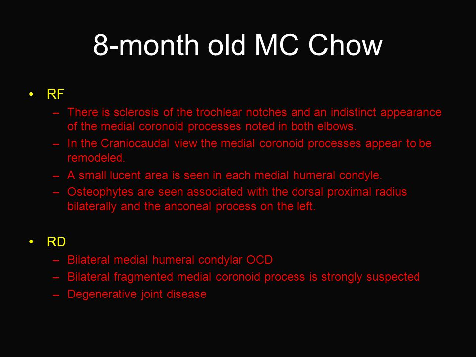 8-month old MC Chow RF –There is sclerosis of the trochlear notches and an indistinct appearance of the medial coronoid processes noted in both elbows.