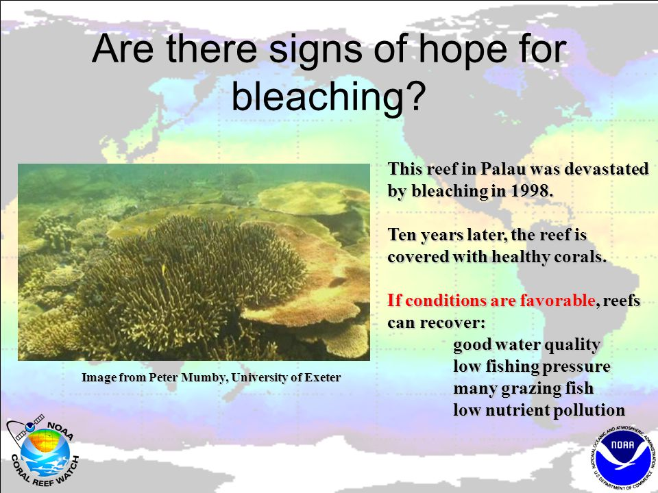 Are there signs of hope for bleaching. This reef in Palau was devastated by bleaching in 1998.