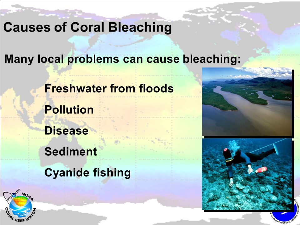 Local managers can: Reduce bleaching Reduce light stress Cool reefs, increase mixing Increase survival Improve water quality Reduce disease prevalence Aid recovery Coral fragmentation Encourage recruitment Protect ecosystem functions (herbivory) Are there signs of hope for bleaching?
