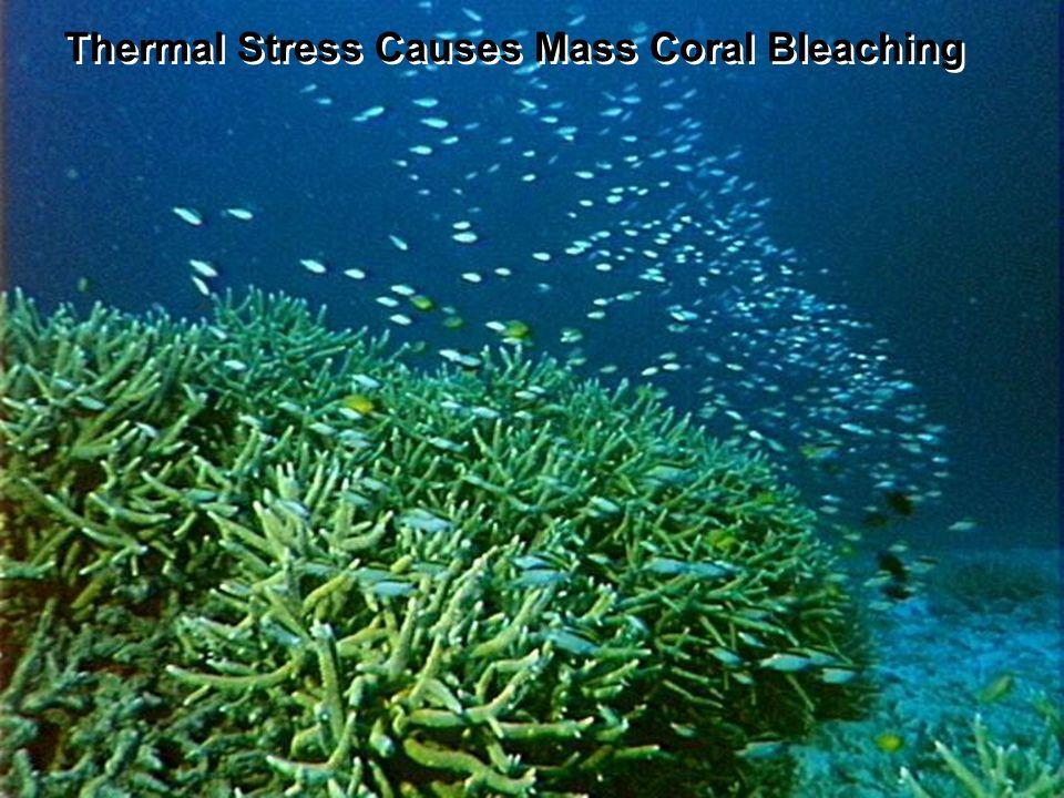 http://coralreefwatch.noaa.gov Activity: Part 1 - SST