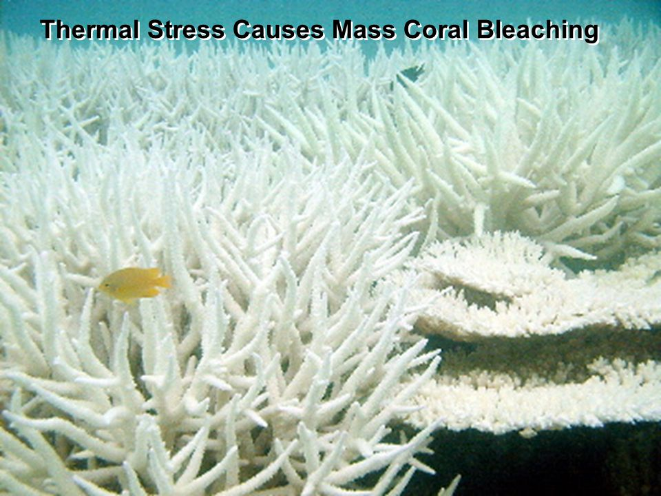 http://coralreefwatch.noaa.gov Activity Answer the questions on your handout Work in groups We will come back together to discuss the answers.