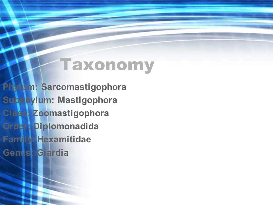 Taxonomy Phylum: Sarcomastigophora Subphylum: Mastigophora Class: Zoomastigophora Order: Diplomonadida Family: Hexamitidae Genus: Giardia