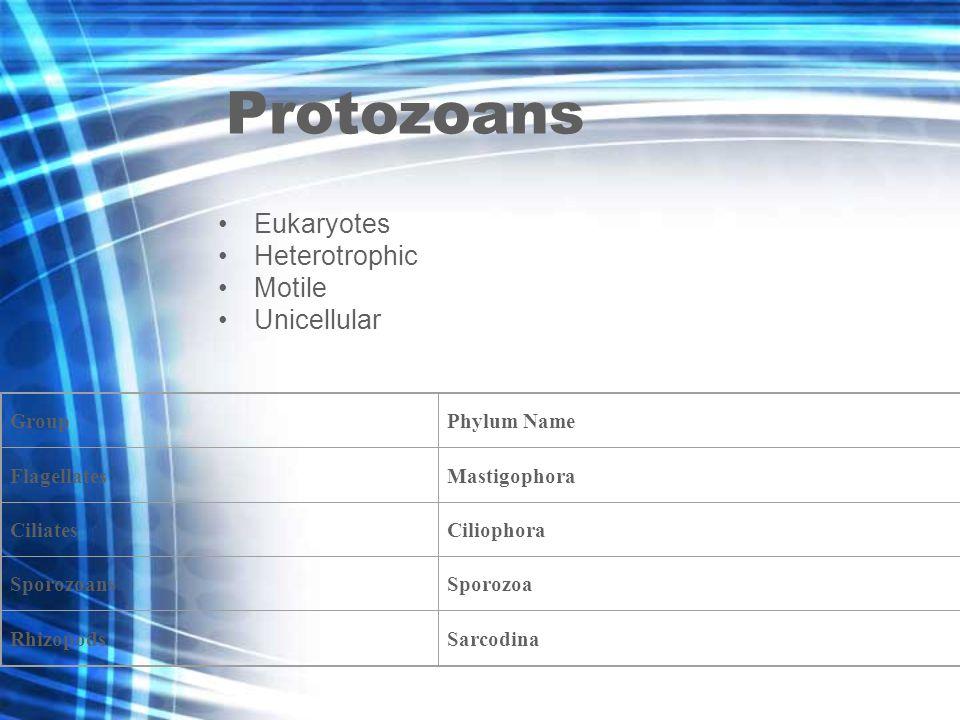 Protozoans Eukaryotes Heterotrophic Motile Unicellular GroupPhylum Name FlagellatesMastigophora CiliatesCiliophora SporozoansSporozoa RhizopodsSarcodina