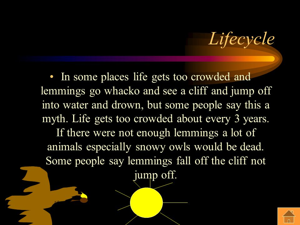 Lifecycle In some places life gets too crowded and lemmings go whacko and see a cliff and jump off into water and drown, but some people say this a myth.
