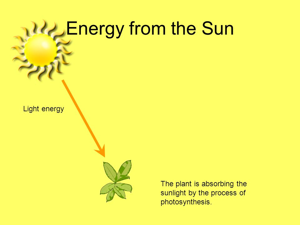 Energy from the Sun Light energy The plant is absorbing the sunlight by the process of photosynthesis.
