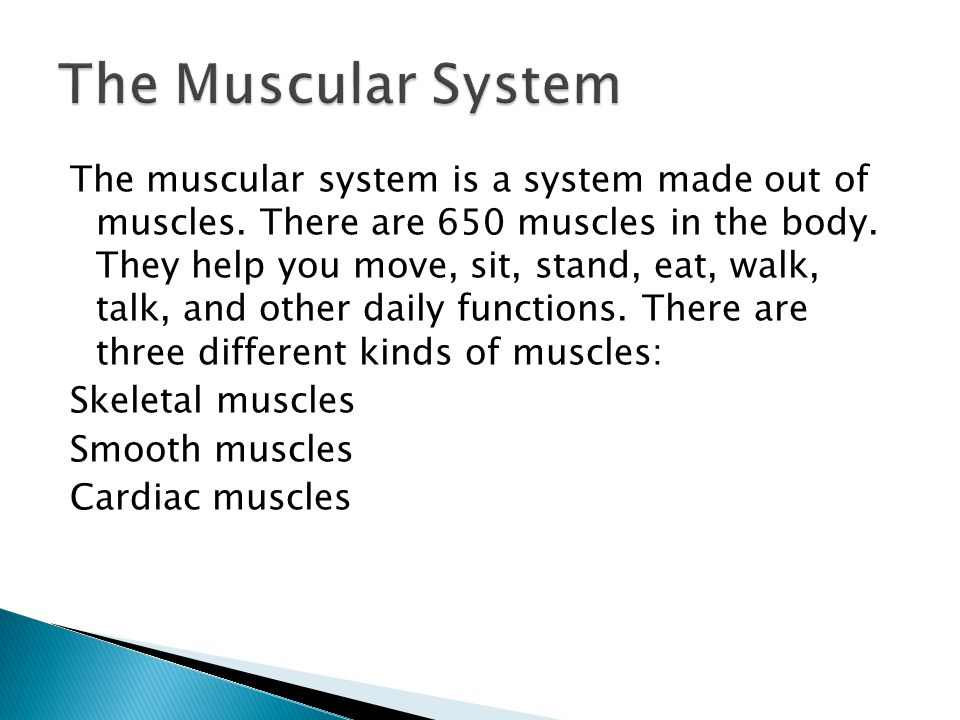 The muscular system is a system made out of muscles.