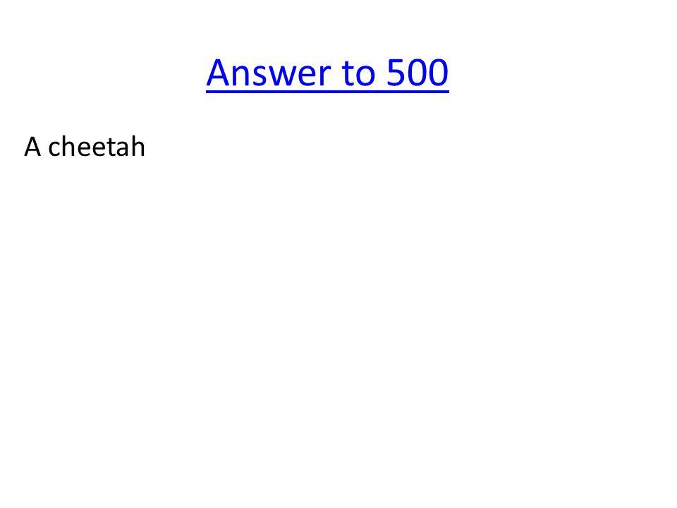 Answer to 500 A cheetah