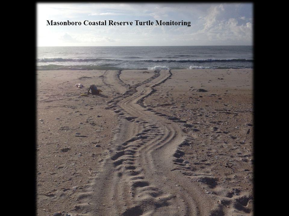 Masonboro Coastal Reserve Turtle Monitoring