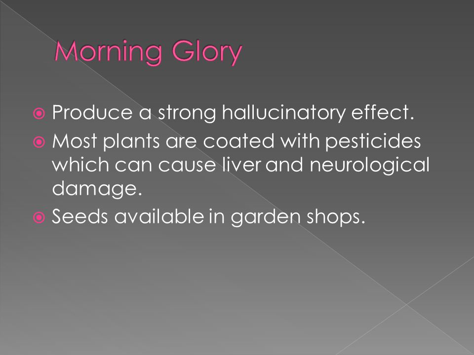  Produce a strong hallucinatory effect.  Most plants are coated with pesticides which can cause liver and neurological damage.  Seeds available in