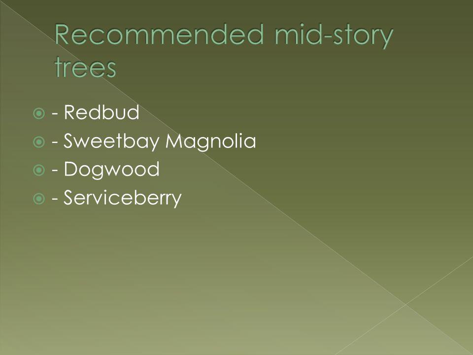  - Redbud  - Sweetbay Magnolia  - Dogwood  - Serviceberry