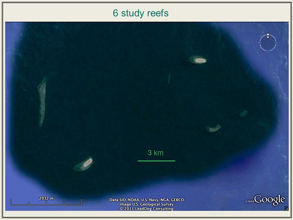 Receivers every 200 m n = 10 Receivers every 200 m n = 11 Within-reef movement x x x x x x x x x Between-reef movement n = 9 Measuring adult fish movement Acoustic telemetry: array of 30 receivers