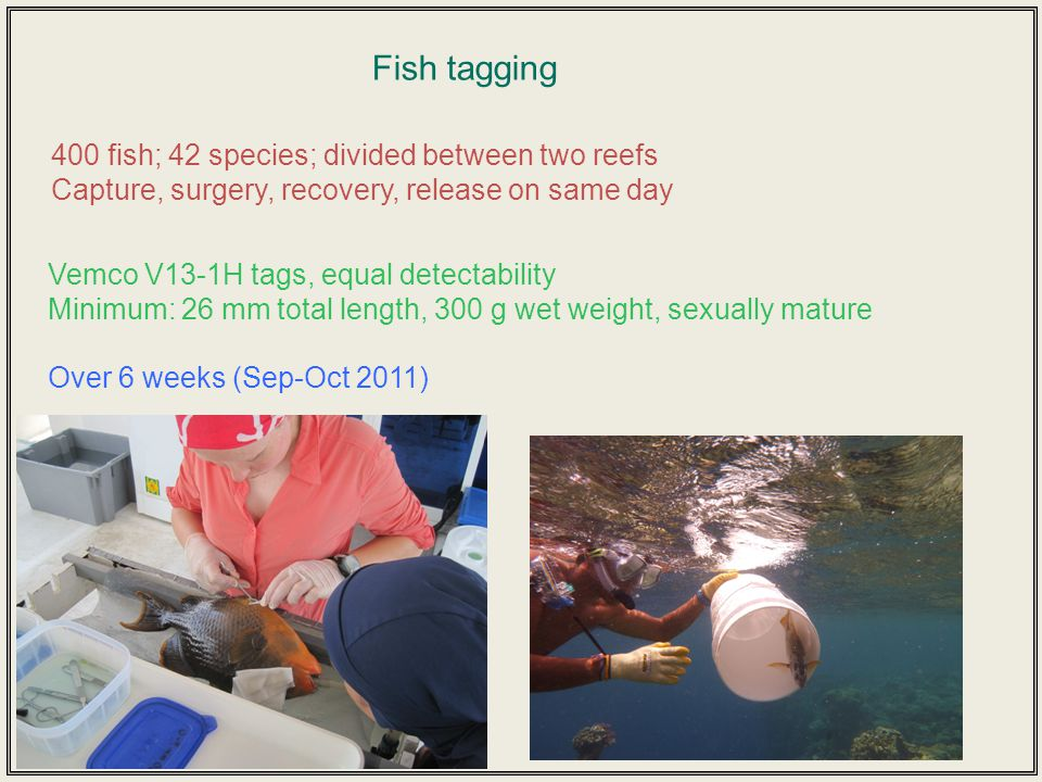 Within-reef movement only 200 m 220 m 430 m Distances between pairs of detections 210 m 1.