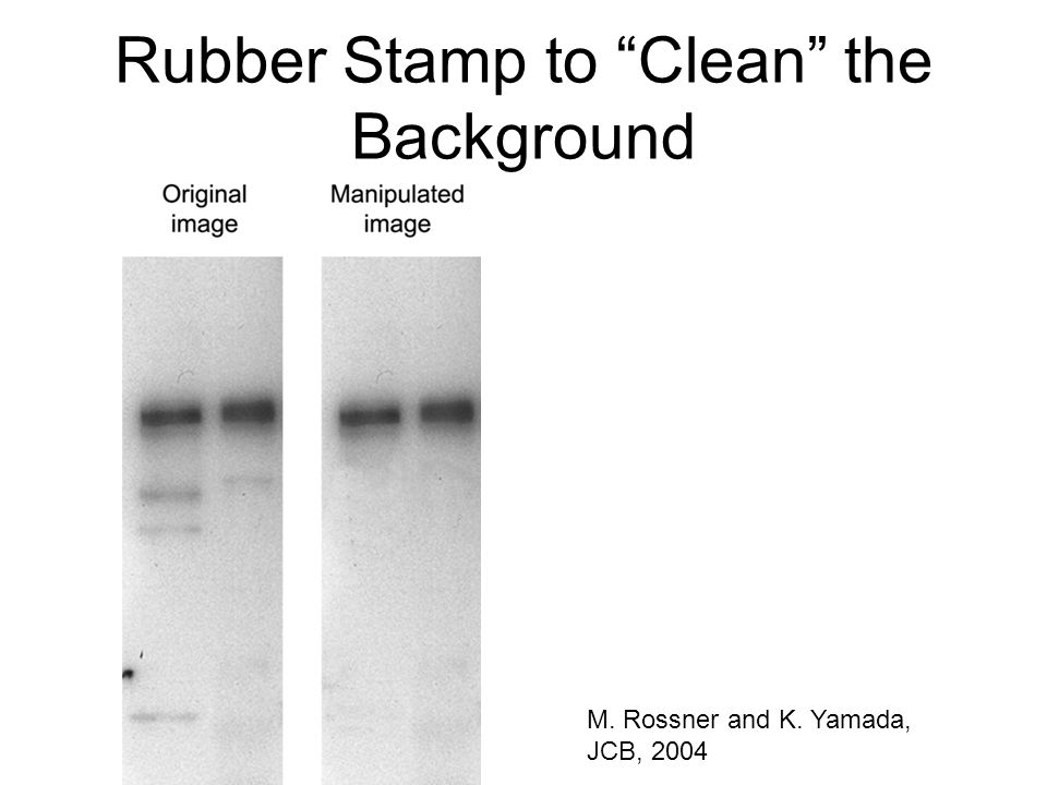 Rubber Stamp to Clean the Background M. Rossner and K. Yamada, JCB, 2004