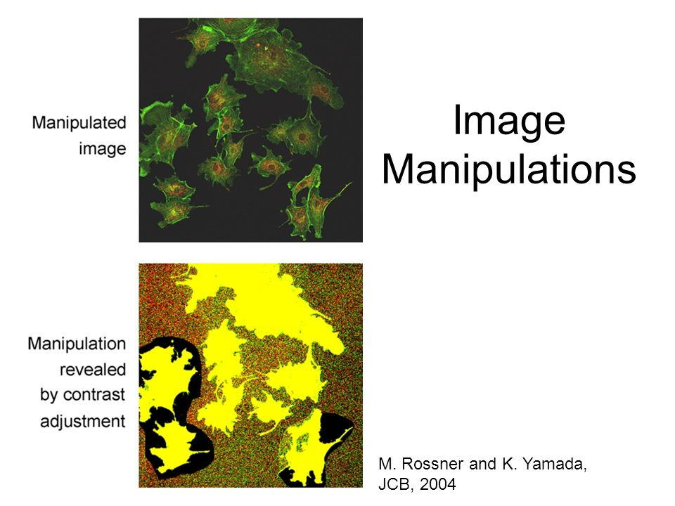 Image Manipulations M. Rossner and K. Yamada, JCB, 2004