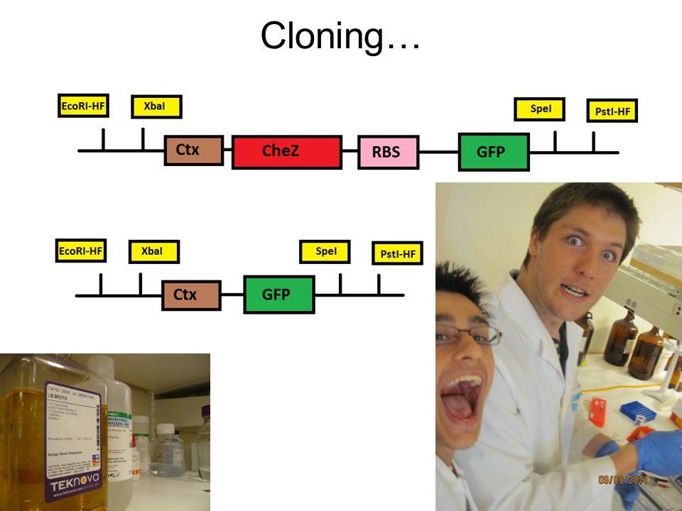 Cloning…