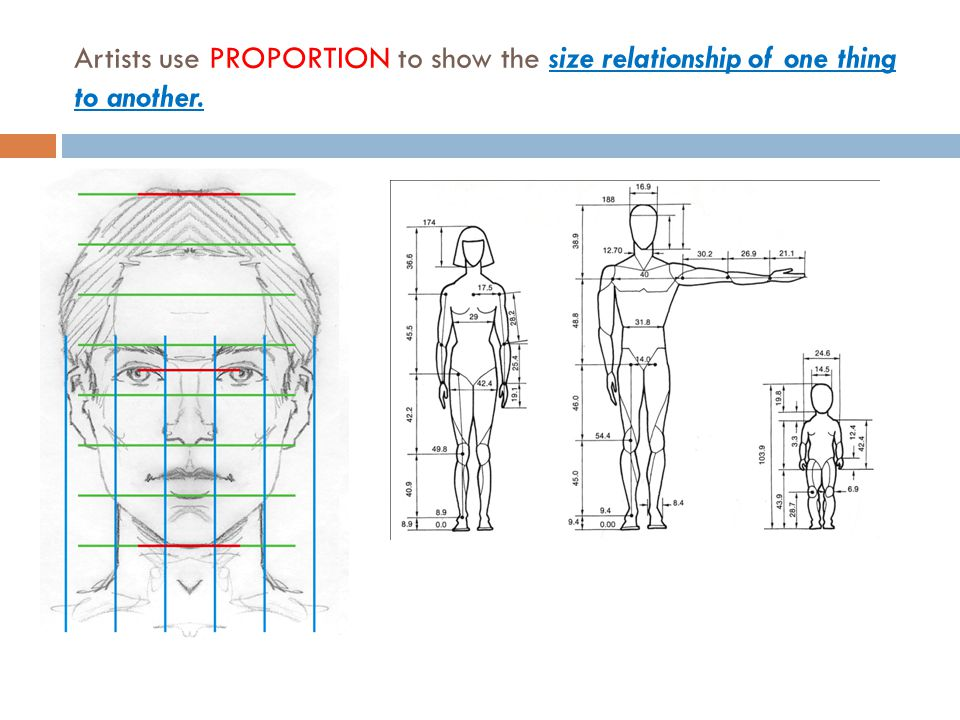 Artists use PROPORTION to show the size relationship of one thing to another.