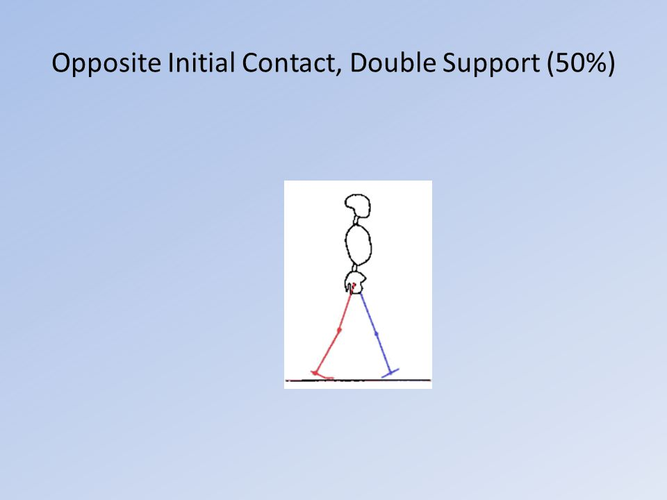 Opposite Initial Contact, Double Support (50%)