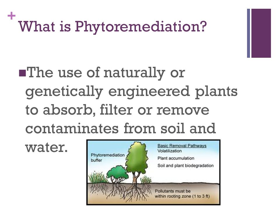 + What is Phytoremediation.
