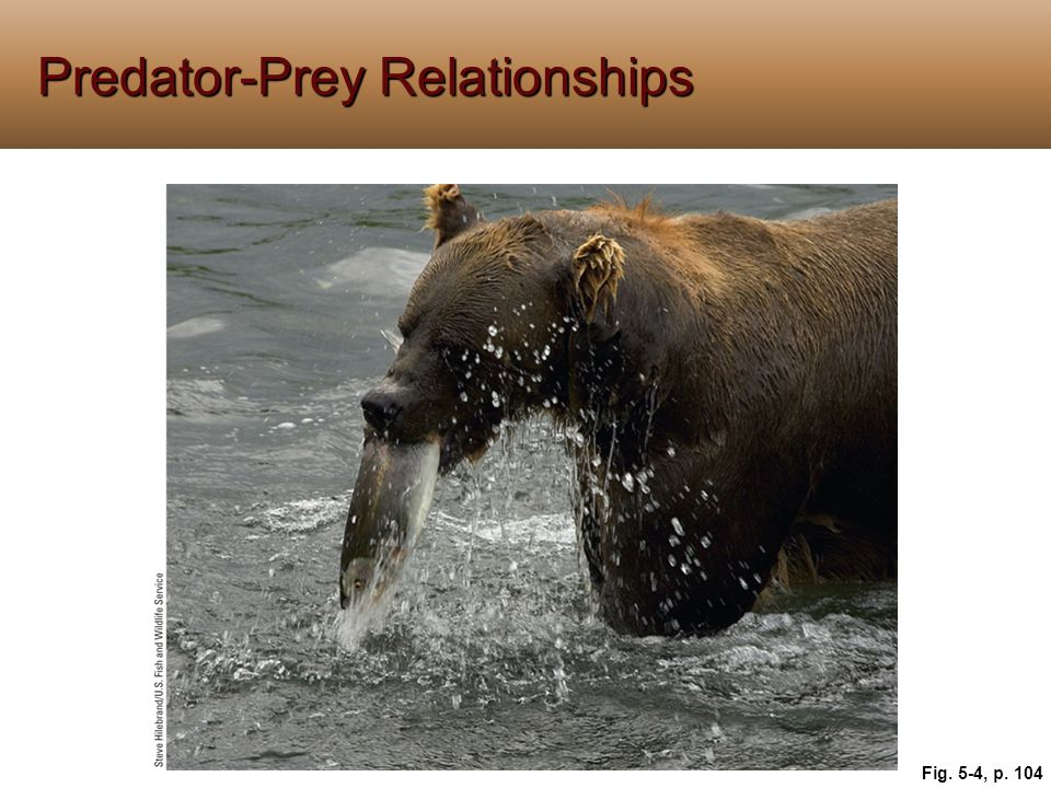 Predator-Prey Relationships Fig. 5-4, p. 104