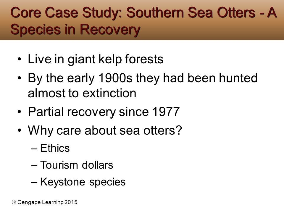 © Cengage Learning 2015 Live in giant kelp forests By the early 1900s they had been hunted almost to extinction Partial recovery since 1977 Why care a