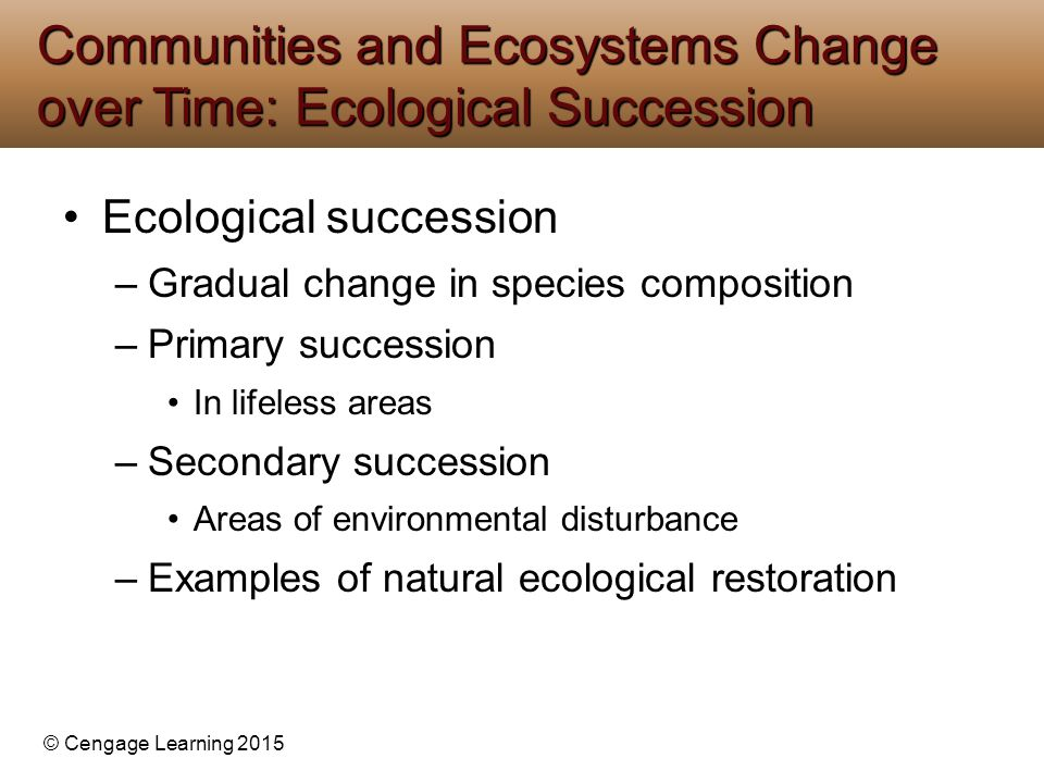 © Cengage Learning 2015 Ecological succession –Gradual change in species composition –Primary succession In lifeless areas –Secondary succession Areas of environmental disturbance –Examples of natural ecological restoration Communities and Ecosystems Change over Time: Ecological Succession