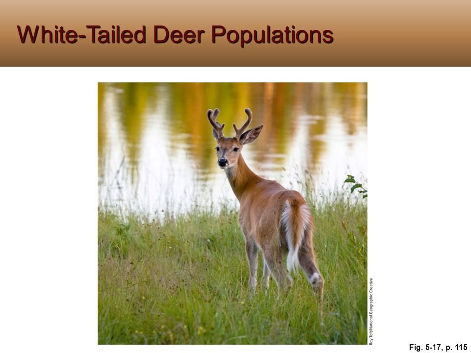 White-Tailed Deer Populations Fig. 5-17, p. 115