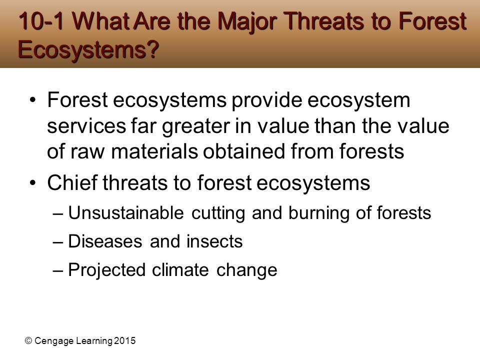© Cengage Learning 2015 Old-growth or primary forest (about 36%) –Uncut not disturbed for several hundred years –Reservoirs of biodiversity Second-growth forest –Secondary ecological succession Tree plantation (tree farm, commercial forest) –May supply most industrial wood in the future Forests Vary in Their Age, Make-Up, and Origins