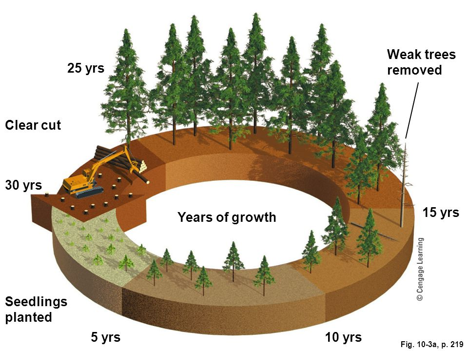 Solutions: Sustainable Forestry Fig. 10-16, p. 227