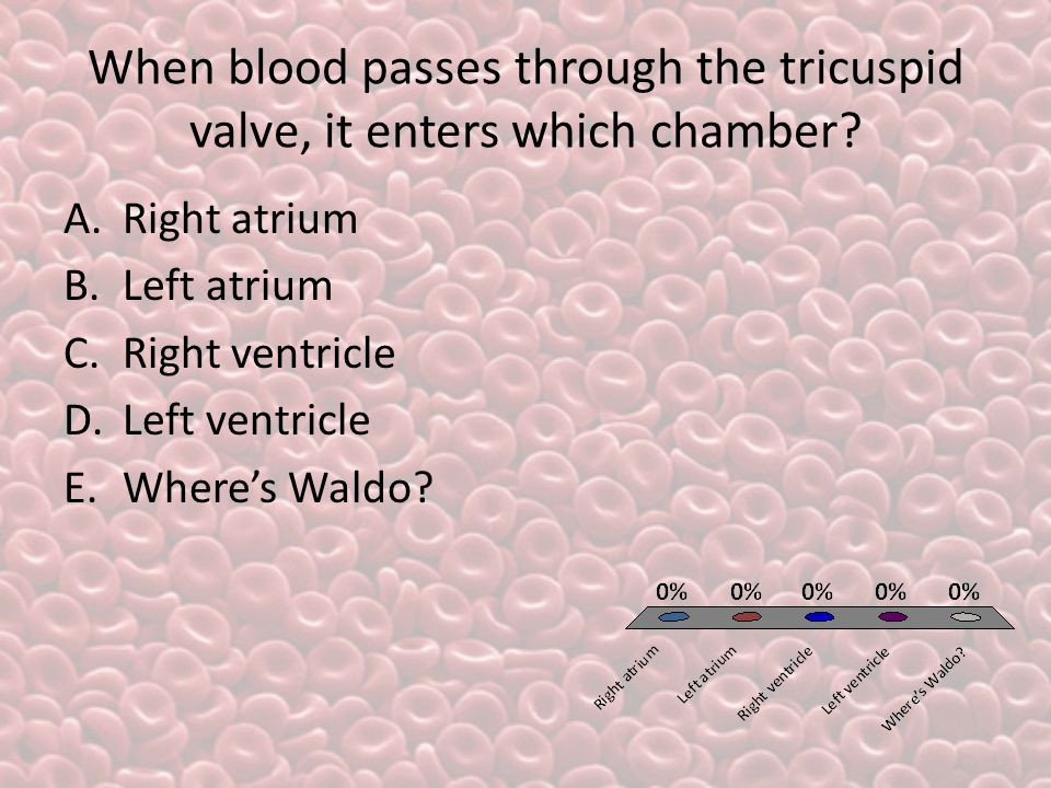 When blood passes through the tricuspid valve, it enters which chamber.