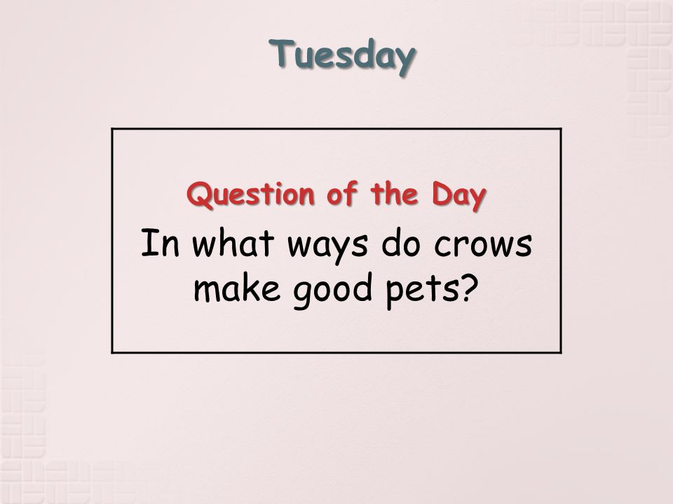 Tuesday Question of the Day In what ways do crows make good pets