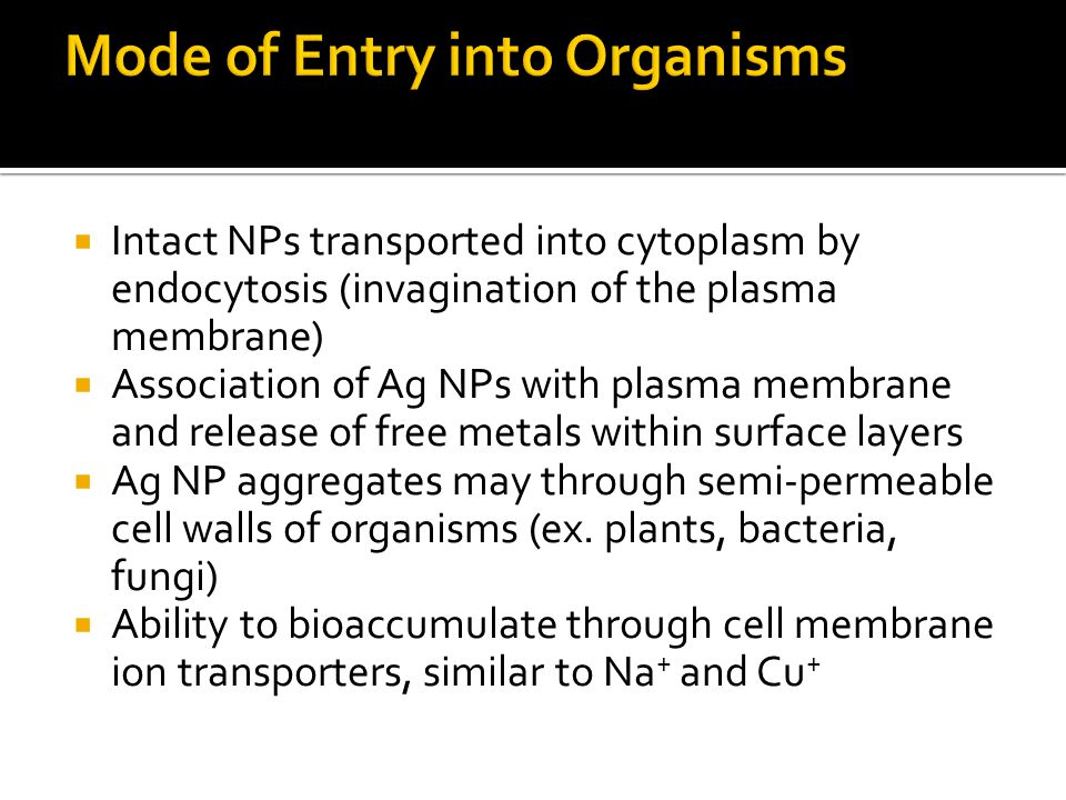  Intact NPs transported into cytoplasm by endocytosis (invagination of the plasma membrane)  Association of Ag NPs with plasma membrane and release of free metals within surface layers  Ag NP aggregates may through semi-permeable cell walls of organisms (ex.