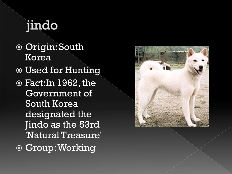  Origin: South Korea  Used for Hunting  Fact:In 1962, the Government of South Korea designated the Jindo as the 53rd 'Natural Treasure'  Group: Wo