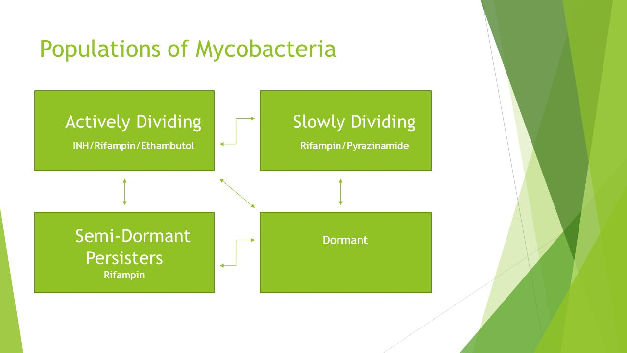 Populations of Mycobacteria Semi-Dormant Persisters Rifampin  Actively Dividing  INH/Rifampin/Ethambutol  Slowly Dividing  Rifampin/Pyrazinamide Dormant