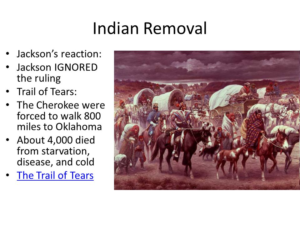 Indian Removal Jackson's reaction: Jackson IGNORED the ruling Trail of Tears: The Cherokee were forced to walk 800 miles to Oklahoma About 4,000 died