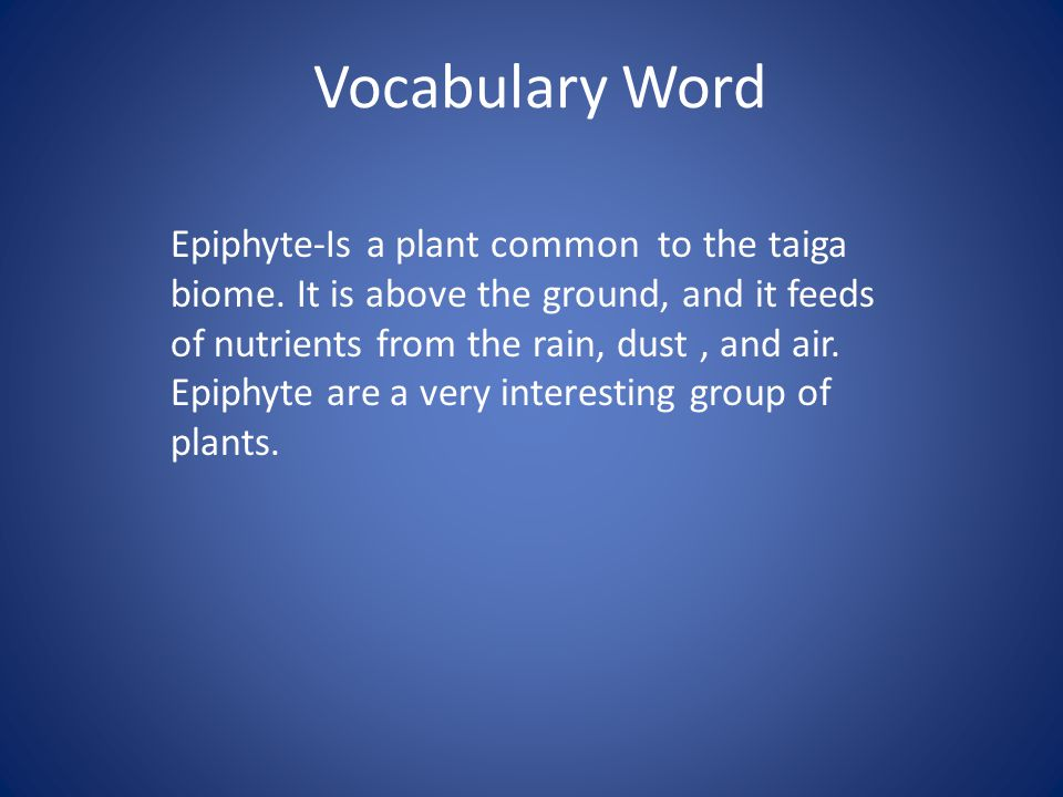 Vocabulary Word Epiphyte-Is a plant common to the taiga biome. It is above the ground, and it feeds of nutrients from the rain, dust, and air. Epiphyt