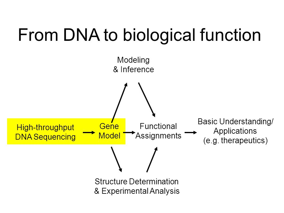 High-throughput DNA Sequencing Gene Model Functional Assignments Basic Understanding/ Applications (e.g.