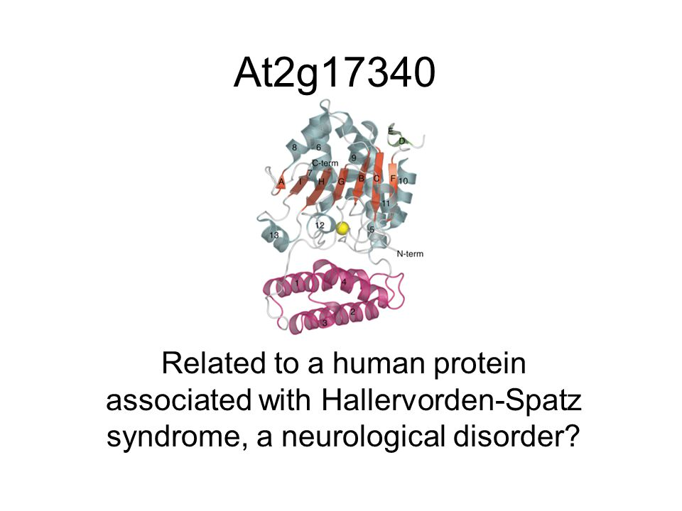 At2g17340 Related to a human protein associated with Hallervorden-Spatz syndrome, a neurological disorder