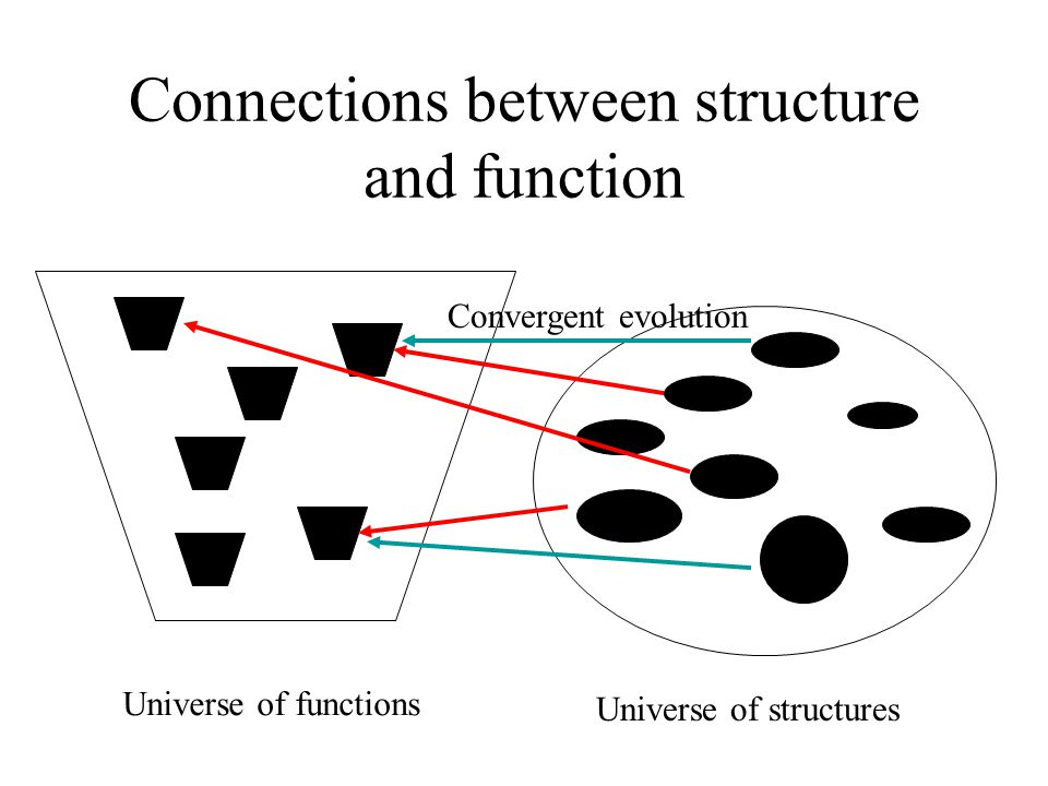 Connections between structure and function Universe of structures Universe of functions Convergent evolution