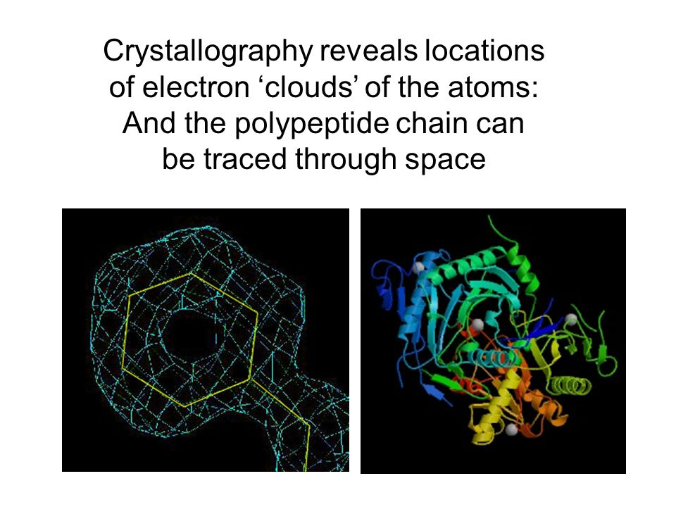 Crystallography reveals locations of electron 'clouds' of the atoms: And the polypeptide chain can be traced through space